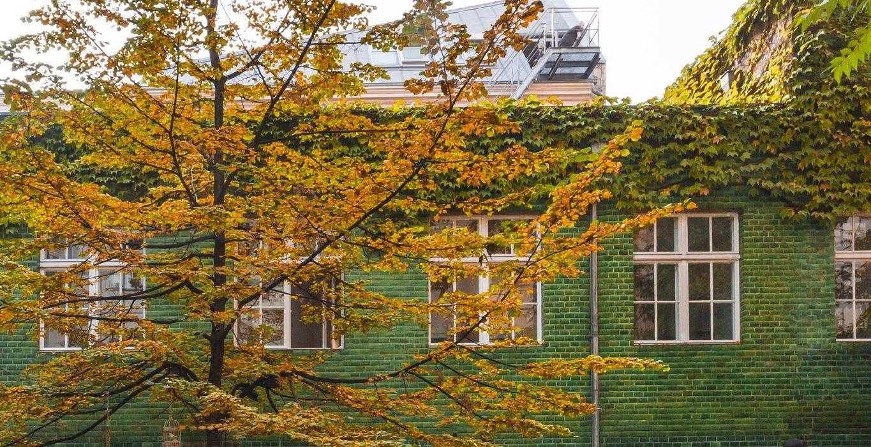 Rosenthaler Straße 37